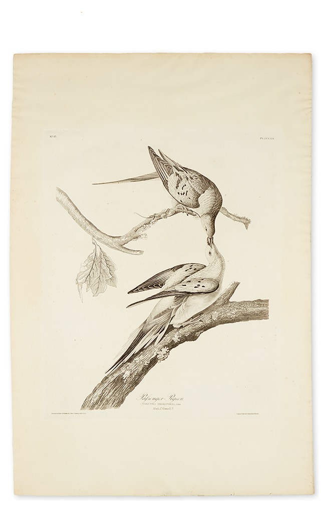 Lot 293: John James Audubon, Passenger Pigeon, Plate LXII, uncolored aquatint and engraved plate, London, 1829. Estimate $8,000 to $12,000.