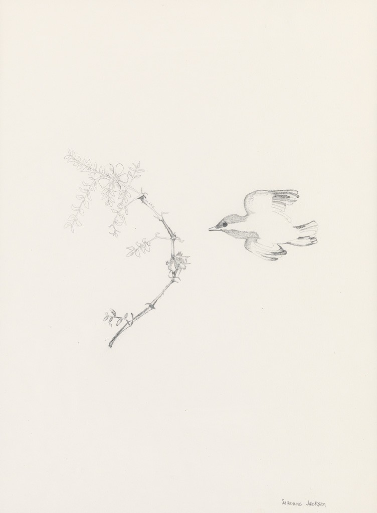 Lot 87: Suzanne Jackson, The Flower and a Bird, graphite and pencil, circa 1970. Estimate $1,000 to $1,500.