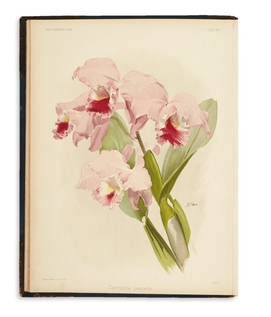 Image of a plate from Lot 306