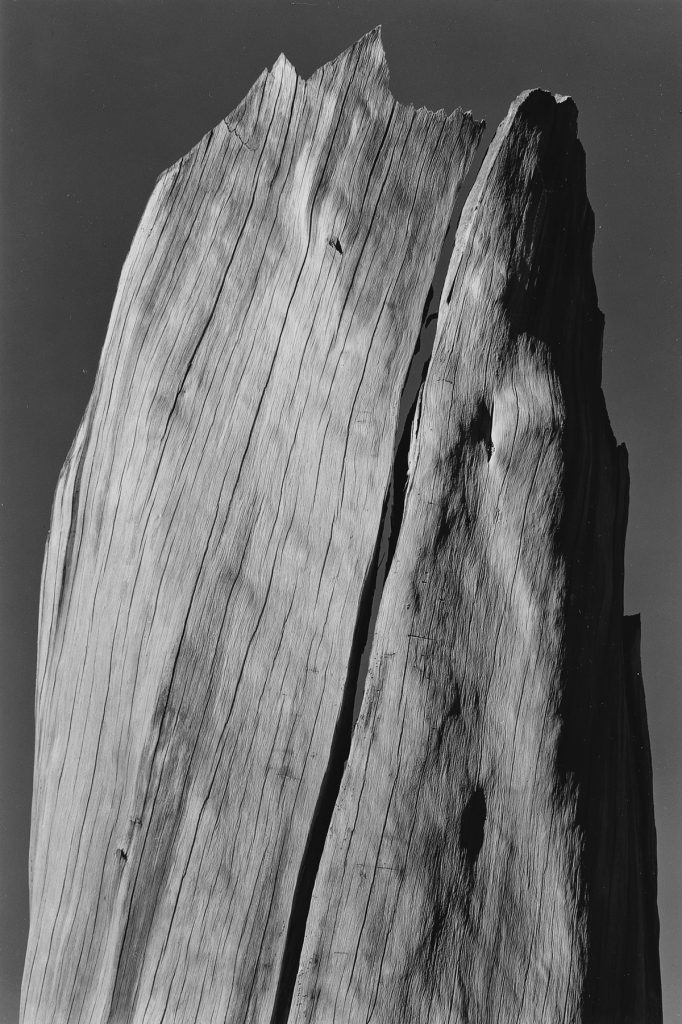 Ansel Adams, Stump, Sierra Nevada, silver print, 1936.