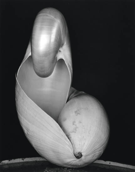 Edward & Cole Weston, Shell, silver print, 1931, printed 1970s.